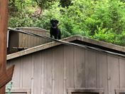 Neighbors Dog