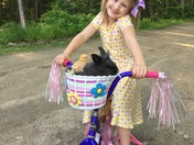 Amelia taking her bunny,Olivia and two favorite chicks for a ride.
