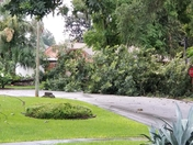 Tree down after today's storms in Ormond Beach.