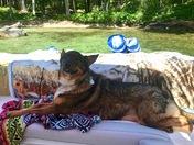 Farley Enjoying the lake