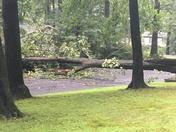 Fallen tree in Hershey
