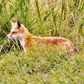 Bombay Hook National Wildlife Preserve