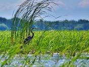 Marshland. Big Creek National Wildlife area.
