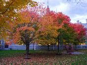 Fall in the Capital