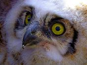 What big eyes buy have!
