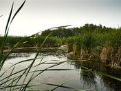 Binney Corner Nature Preserve