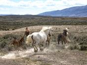 Sand Wash Basin Herd Management Area