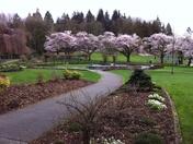 In Springtime -- Beautiful Burnaby Mountain Park