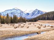 Sunrises with Wildlife in the Rockies