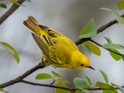 Bird in Point Pelee 72DPI