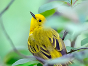 A bird in Point Pelee 72DPI