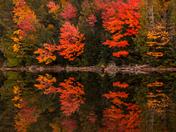 Colours of Algonquin Park
