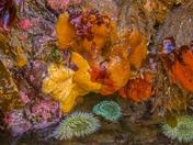 Intertidal Life at Spring Low Tide