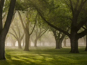 Morning Mist in Coronation Park