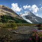 Mount Robson Wildflowers