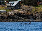 Livingroom views of Orcas