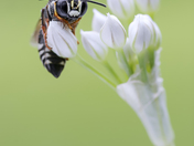 Wasp and Onion