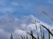 Watching Airshow in a marsh.