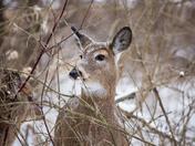 Watching Through The Brush
