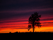 Lonesome Tree At Sunset