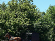 Shrive Ohio Amish horse And Wagon