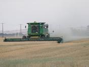 Combining Wheat
