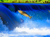 Run Salmon, Run