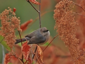Common Bird in an Uncommon Place