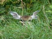 Peek-A-Boo....I see you!