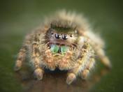 Cute or Creepy?