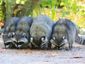 Four Amigos