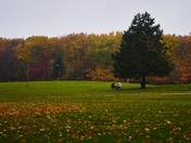 Fall morning.