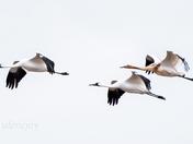Family in Flight