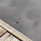 dragon fly by the dock