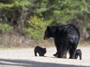 Young mother and cubs