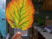 Aria Holding a Leaf Toward the Sun