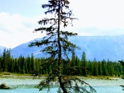 Kooteney National park