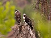 Arapaho-Roosevelt National Forest