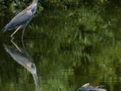 Harris Neck National Wildlife Refuge