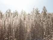 Frosty morning in Algonquin