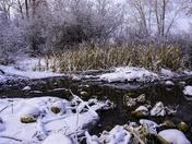 Frosty Winter Morning by Pond