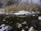 Reflections in Frosty Winter Pond