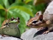 got any nuts froggy?