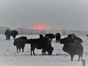herd in the mist
