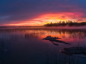 Ducks Watching the Sunrise