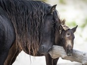 Sable Island Father and Son