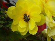pollen seeker
