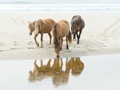 Reflections on Sable Island National Park Reserve