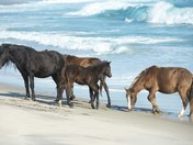 Surf's Up on Sable Island