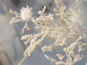 Cute Frost